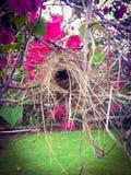 Ptaka gniazdeczko Obraz Royalty Free