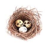 Ptaka gniazdeczko i jajka odosobniony biały tło obraz royalty free