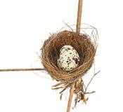 Ptaka gniazdeczko i jajka odosobniony biały tło fotografia royalty free