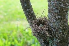 Ptaka gniazdeczko w naturze Zdjęcia Royalty Free