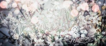 Ptaka gniazdeczko z jajkami na czereśniowego drzewa okwitnięciu Wielkanocny sztandar z ładną wiosny naturą fotografia stock