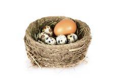 Ptaka gniazdeczko z jajkami nad bielem obraz royalty free