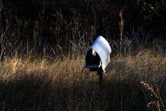 Ptaka gniazdować domowa klauzura obraz royalty free
