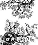 Ptaka i ślimaczka czerń Zdjęcie Stock