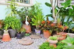 Ptaka i ornamentu rośliny obok zielonego domu Zdjęcia Royalty Free