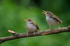 ptaka karcianego powitania ilustracyjnego miejsca śpiewacki teksta wektor twój Zdjęcie Stock