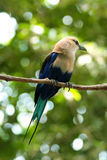 ptaka mały gałęziasty cienieje Zdjęcia Royalty Free