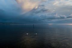 2 ptaka na Bodensee Zdjęcie Stock