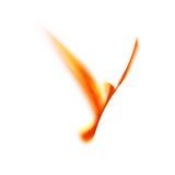 ptaka ogień Zdjęcia Royalty Free