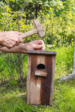 ptaka ogródu dom Obrazy Royalty Free