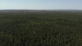 Ptaka oka widok pi?kny zielony lasowy antena strza? Widok z lotu ptaka 4K Kamera lata naprz?d nad lasem zdjęcie wideo