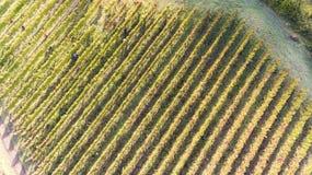 Ptaka oka widok winnica w południowym Włochy Zdjęcie Royalty Free