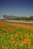 Ptaka Pekin Gniazdowy Olimpijski stadium fotografia stock