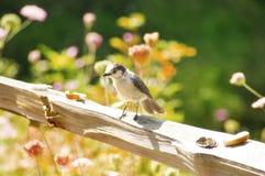 Ptaka przerwa dla chleba zdjęcia royalty free