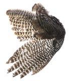 Ptaka skrzydło z brown piórkami obrazy royalty free