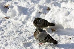 Ptaka życie w zimie fotografia royalty free