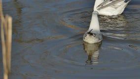 Ptaka zachowanie zbiory wideo