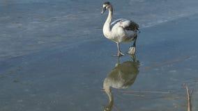 Ptaka zachowanie zbiory