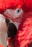 Ptaka Zamknięty Up Zdjęcie Stock