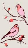 ptaki ilustracja wektor