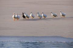 Ptaki Obrazy Stock
