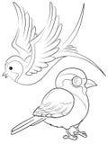 Ptaki barwi stronę royalty ilustracja
