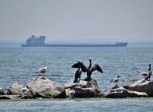 Ptaki blisko wody Zdjęcia Royalty Free