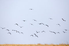 Ptaki - Chobe N P Botswana, Afryka Obraz Stock