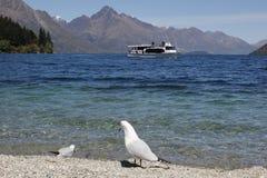 Ptaki cieszy się brzeg Jeziorny Wakatipu Zdjęcia Stock