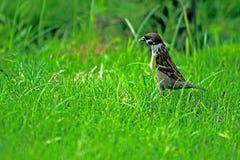 Ptaki dla jedzenia Obraz Royalty Free