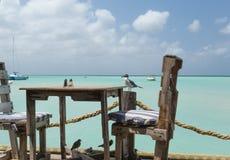 Ptaki dostają przygotowywającymi dla lunchu w Aruba Obraz Royalty Free