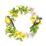 Ptaki, dzicy ziele, kwiaty Akwarela okręgu granica Kwiecisty wianek Zdjęcia Stock