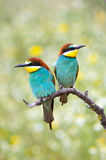 ptaki enamored Fotografia Stock