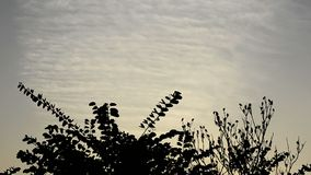 Ptaki Flay Daleko od zbiory