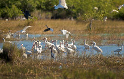 Ptaki Floryda Obrazy Royalty Free