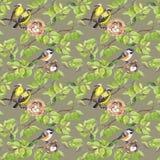 Ptaki, gniazdeczko na gałąź deseniowy target668_0_ bezszwowy akwarela Zdjęcie Royalty Free