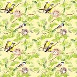 Ptaki, gniazdeczko na gałąź deseniowy target668_0_ bezszwowy akwarela Obraz Royalty Free