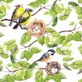 Ptaki, gniazdeczko na gałąź deseniowy target668_0_ bezszwowy akwarela Fotografia Stock