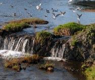 ptaki gra Zdjęcie Stock
