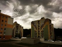ptaki gromadzą się serce kształtującego Zdjęcia Stock