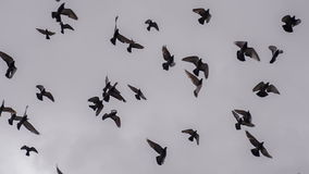 ptaki gromadzą się ampułę