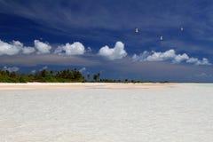 Ptaki i bufiaste chmury nad dziką palmą wyrzucać na brzeg Zdjęcia Stock