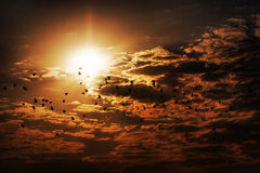Ptaki i chmury Obraz Royalty Free