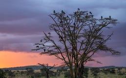 Ptaki i drzewo Obrazy Stock