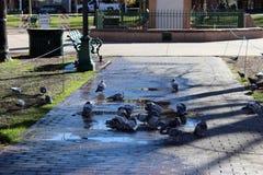 Ptaki i Więcej ptaki Zdjęcia Royalty Free