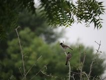Ptaki ind urocze fotografie ptaki fotografia royalty free