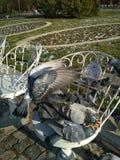 Ptaki je pizzę Zdjęcie Royalty Free