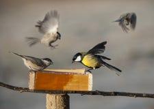 Ptaki je ziarna od ptasiego dozownika Zdjęcia Stock