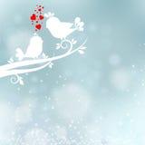 ptaki kochają dwa Zdjęcia Royalty Free