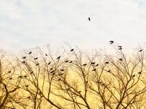 Ptaki Lata Na gałąź W zmierzchu zdjęcia stock
